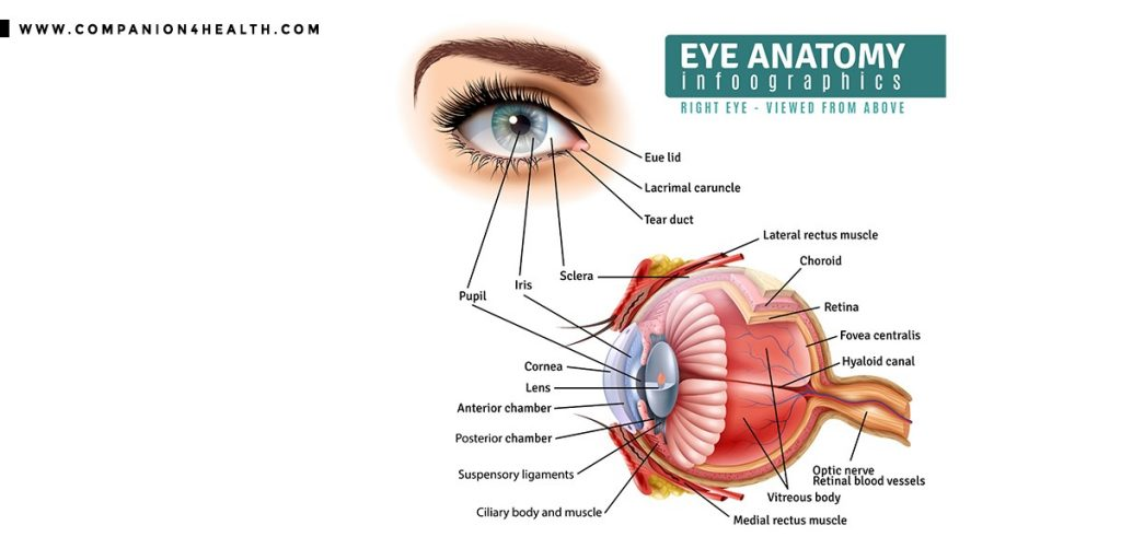 Eye conditions: Everything you nee to know - Companion4health