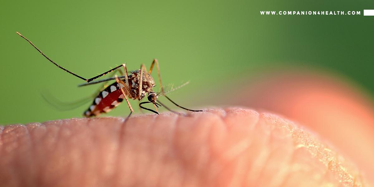 Dengue: Symptoms, Causes and Prevention - Companion4health